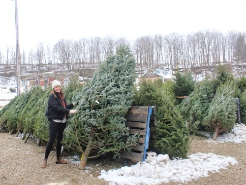Westside Nursery Christmas Trees