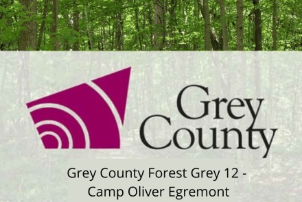 Grey County Forest 12 - Camp Oliver Egremont
