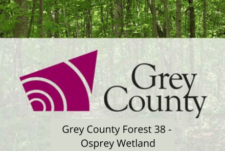 Grey County Forest 38 - Osprey Wetland