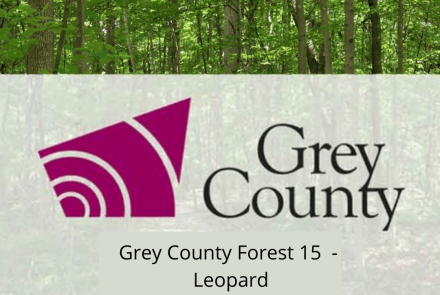 Grey County Forest 15 - Leopard