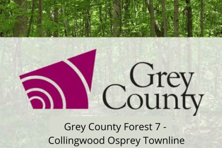 Grey County Forest 7 - Collingwood Osprey Townline